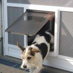 Insektenschutztür mit Katzen-Klappe